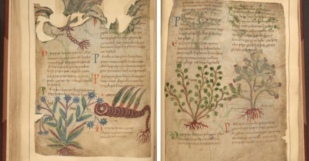 Anglo-Saxon Herbal Remedies Manuscript
